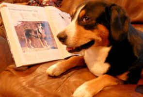 Data posing with Dog Breed Encyclopedia he is featured in
