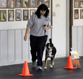 Data & I doing rally obedience
