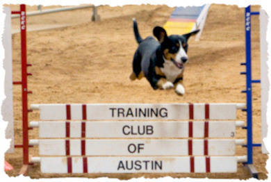 Kai taking a panel jump at the Capitol Dog Training Club of Austin TX trial