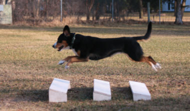 Data practicing formal obedience broad jump exercise